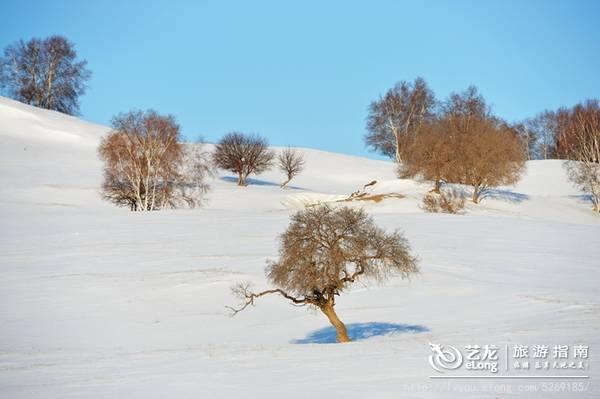 塞罕坝冬韵(图组43P)