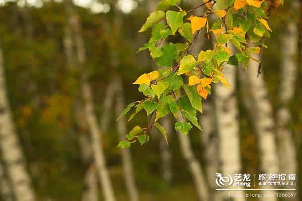 【河北】这才是真实的坝上:秋色缤纷美如画